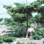 「みどりに親しむ日」の樹木剪定作業02