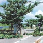 「みどりに親しむ日」の樹木剪定作業03