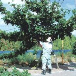 「みどりに親しむ日」の樹木剪定作業04