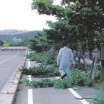 「みどりに親しむ日」の樹木剪定作業05