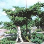 「みどりに親しむ日」の樹木剪定作業07