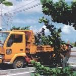 「みどりに親しむ日」の樹木剪定作業01