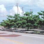 「みどりに親しむ日」の樹木剪定作業09