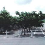 「みどりに親しむ日」の樹木剪定作業12