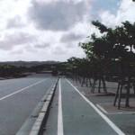 「みどりに親しむ日」の樹木剪定作業15