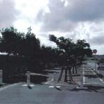 「みどりに親しむ日」の樹木剪定作業16